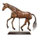 sketching models, horses,