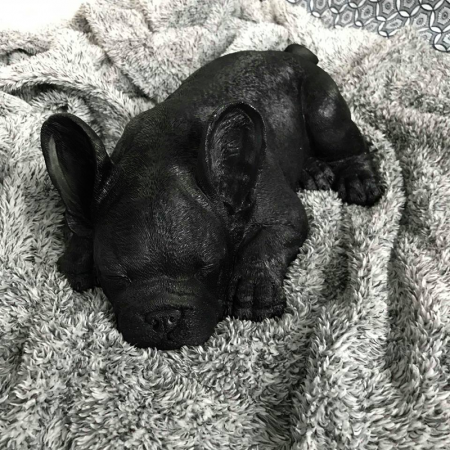 Black sleeping Frenchie